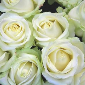 mazzo-rose-bianche