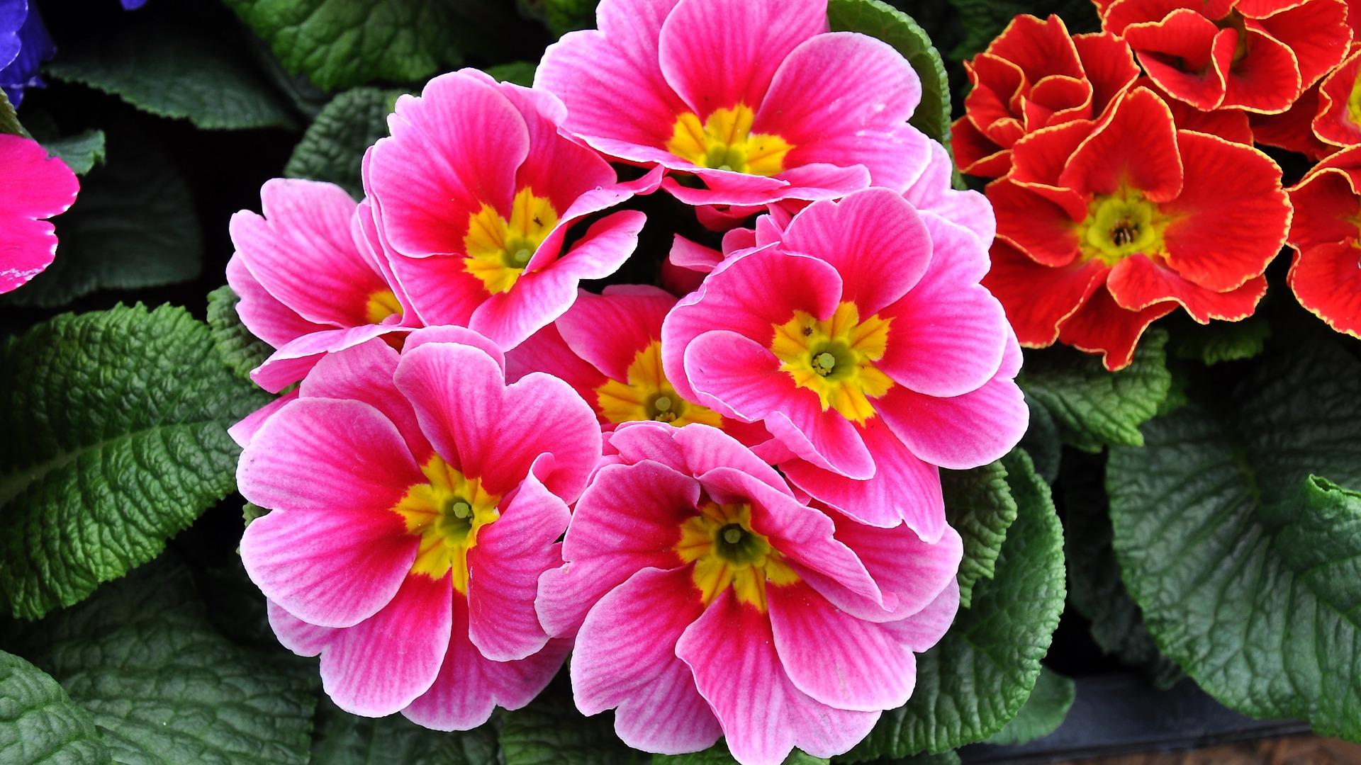 I fiori da regalare in primavera farfallerare - Fiori primaverili ...