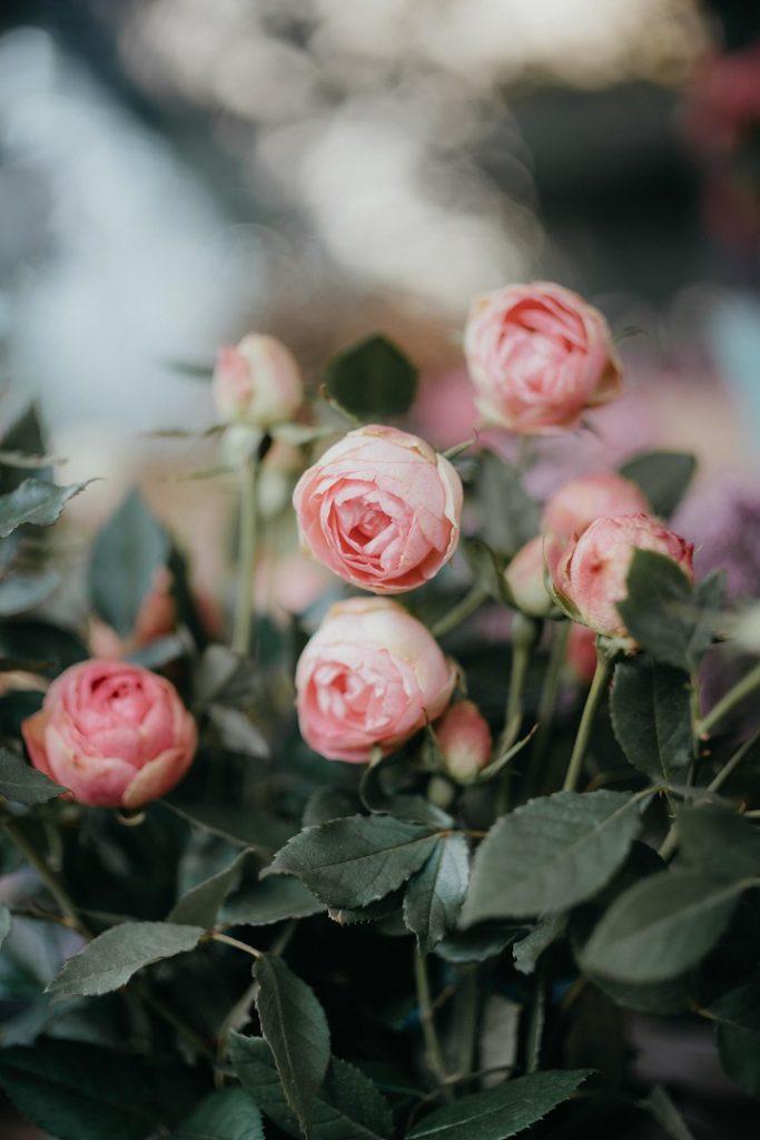 rose da giardino farfalle rare roma